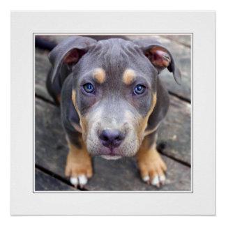 Puppy Zeus - Mother's Day