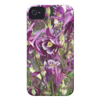 Purple and White Columbines iPhone 4 Covers