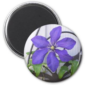 Purple Clematis Magnet