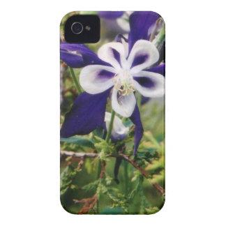 Purple Columbines iPhone 4 Cases