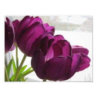 Purple Tulips With Snowy Backround Photograph