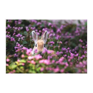 Rabbit farm canvas prints