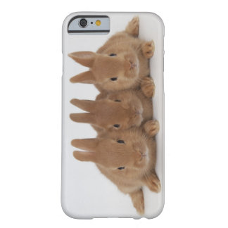 Rabbits.Netherland Dwarfs. Barely There iPhone 6 Case