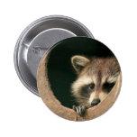 Racoon hide-and-seek 6 cm round badge