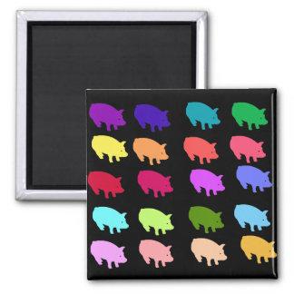 Rainbow Pigs Square Magnet