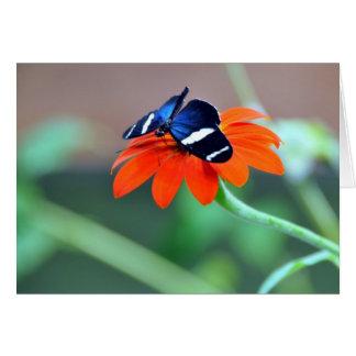 Rainforest Butterfly Card
