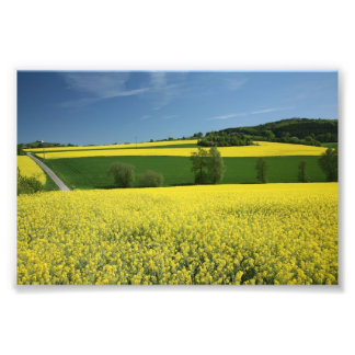 Rapeseed field near Bavenhausen, Germany Photo
