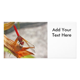 Red Dragonfly on Tiger Lily Personalised Photo Card
