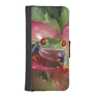 Red-eyed tree frog Agalychnis callidryas)