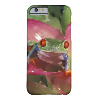 Red-eyed tree frog Agalychnis callidryas) Barely There iPhone 6 Case