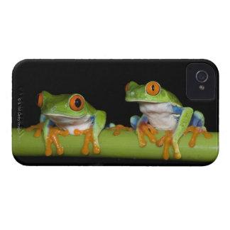Red-eyed Tree Frogs (Agalychnis callidryas) iPhone 4 Cases