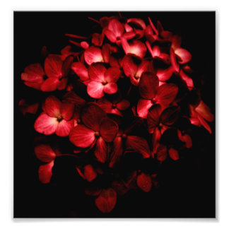 Red Flowers Bouquet in Black Background Photo