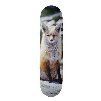Red Fox sitting on snow bank, Vulpes, Mt. 19.7 Cm Skateboard Deck