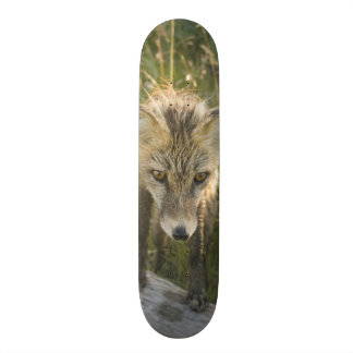 Red Fox, Vulpes fulva on log, Wildflowers, Skateboard Decks