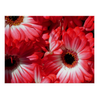 Red Gerberas Poster, S Cyr Poster