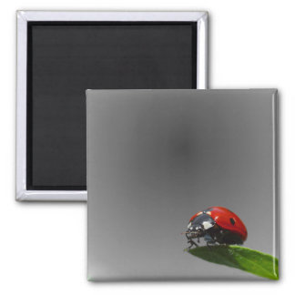 Red Lady Bug On Leaf - B&W Fading Background Square Magnet