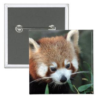 Red Panda, Taronga Zoo, Sydney, Australia 15 Cm Square Badge