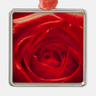 Red rose macro admission Silver-Colored square decoration