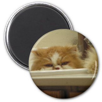 Red White Persian Cat 6 Cm Round Magnet