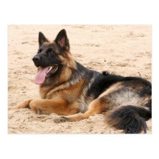 Resting German Shepherd Dog Postcard