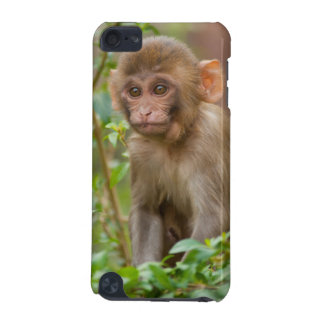 Rhesus Monkey Baby, Monkey Temple, Jaipur iPod Touch 5G Covers