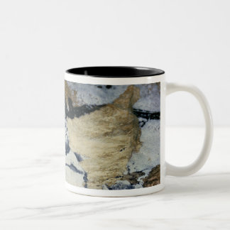Rock painting of a bull with long horns Two-Tone mug