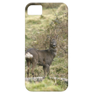 Roe Deer Buck iPhone4 Case-Mate ID Case For The iPhone 5