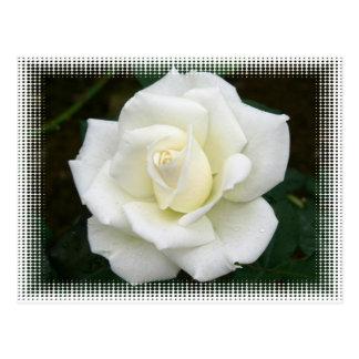 Rose Meanings Postcard