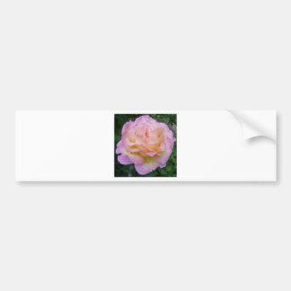 Rose with rain drops bumper sticker