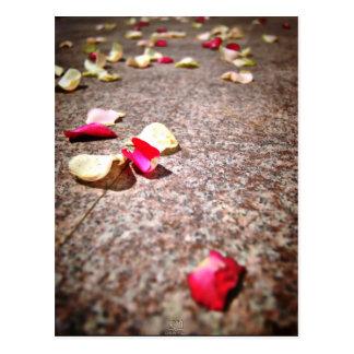 Roses Petal Postcard