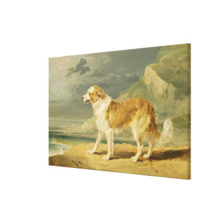 Rough-coated Collie, 1809 (oil on board) Canvas Prints