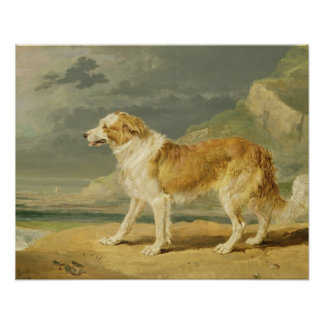Rough-coated Collie, 1809 (oil on board) Poster
