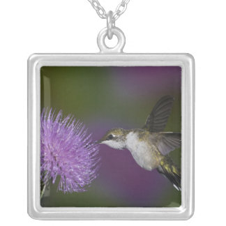 Ruby-throated hummingbird in flight at thistle square pendant necklace