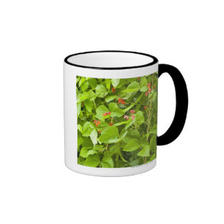 Runner beans in flower ringer mug