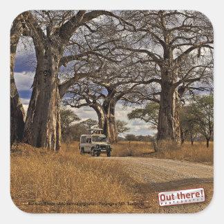 Safari Square Sticker