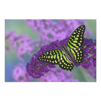 Sammamish Washington Photograph of Butterfly 25