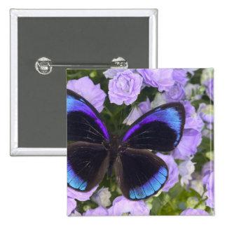 Sammamish Washington Photograph of Butterfly 2 15 Cm Square Badge