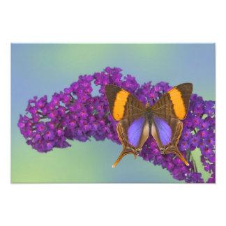 Sammamish Washington Photograph of Butterfly 36