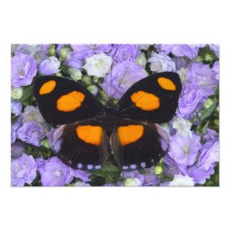 Sammamish Washington Photograph of Butterfly 4