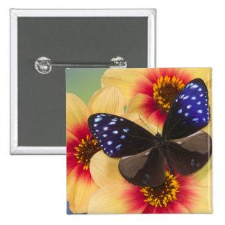 Sammamish Washington Photograph of Butterfly 40 15 Cm Square Badge