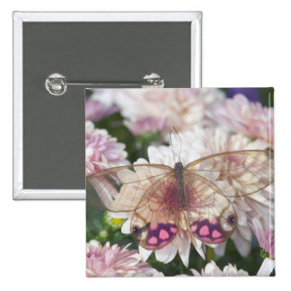 Sammamish Washington Photograph of Butterfly on 15 15 Cm Square Badge
