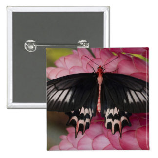 Sammamish, Washington. Tropical Butterflies 10 15 Cm Square Badge