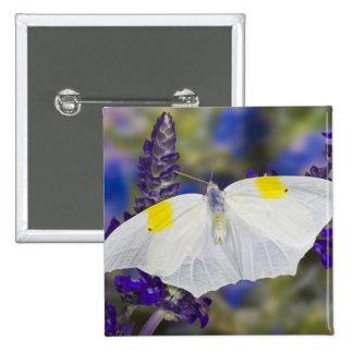 Sammamish, Washington. Tropical Butterflies 13 15 Cm Square Badge