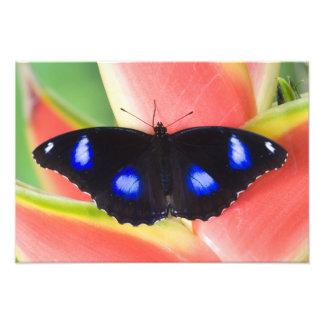 Sammamish, Washington. Tropical Butterflies 24 Photo Print