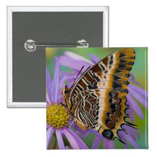 Sammamish Washington Tropical Butterflies 3 15 Cm Square Badge