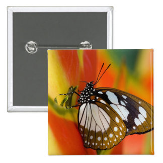 Sammamish, Washington. Tropical Butterflies 42 15 Cm Square Badge
