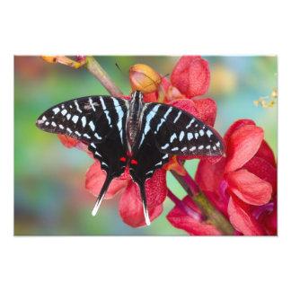 Sammamish, Washington. Tropical Butterflies 52 Art Photo