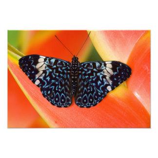 Sammamish, Washington. Tropical Butterflies 57 Photo