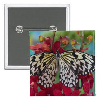 Sammamish, Washington. Tropical Butterflies 63 15 Cm Square Badge