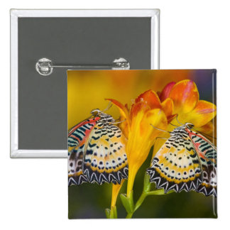 Sammamish, Washington. Tropical Butterflies 68 15 Cm Square Badge